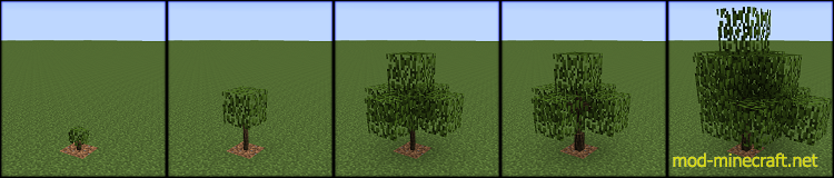 Growing-Trees-1.png