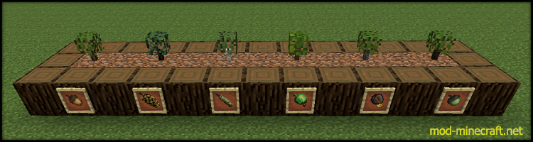 Growing-Trees-3.png